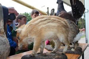 Am Infomobil der Jägerschaft wurden die heimischen Tiere vorgestellt