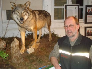 Der Wolf ist auch im Raum Burgwedel / Burgdorf heimisch geworden, bestätigt Förster Thomas Behling. Foto: Oliver Brandt.