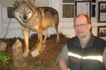 Wolfsnachwuchs wird 2015 im Raum Burgwedel / Burgdorf erwartet