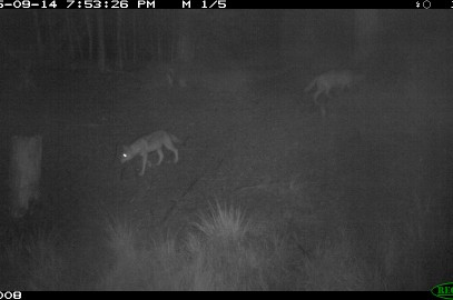 Aktuelles aus dem Wolfsmonitoring