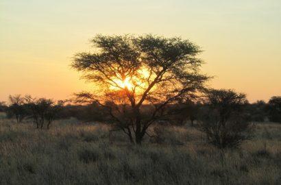 Jagd in Namibia – Vortrag am 01.06.2018 19:00Uhr